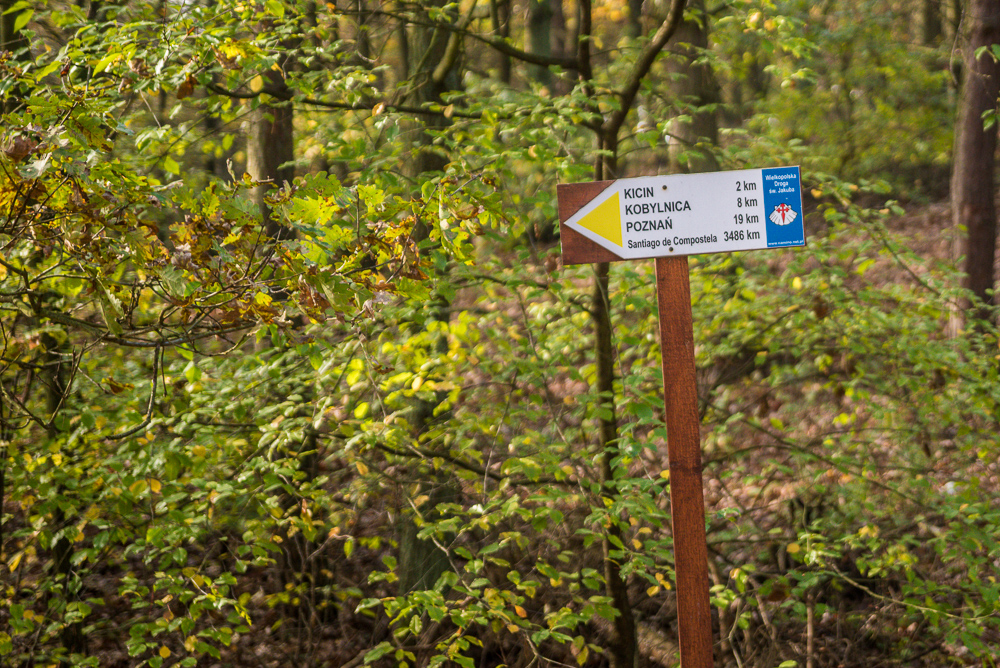 Park krajobrazowy Puszcza Zielonka - Dziewicza Góra